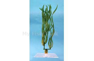 Corkscrew Val - 18 in.  Fantastic Water Wonders plants are beautiful aquatic plant replicas and in turn will provide a natural, safe and lush paradise for your fish. Durable plastic plants with gravel held shoe to minimize floating.