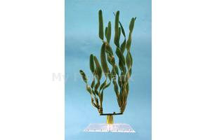 Jungle Val - 18 in.  Fantastic Water Wonders plants are beautiful aquatic plant replicas and in turn will provide a natural, safe and lush paradise for your fish. Durable plastic plants with gravel held shoe to minimize floating.